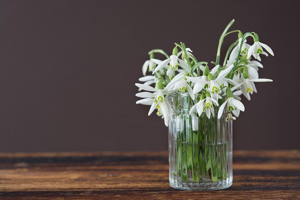 A vase of pretty white snowdrops