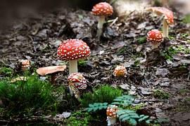 Beechwood Sickener group in woodland