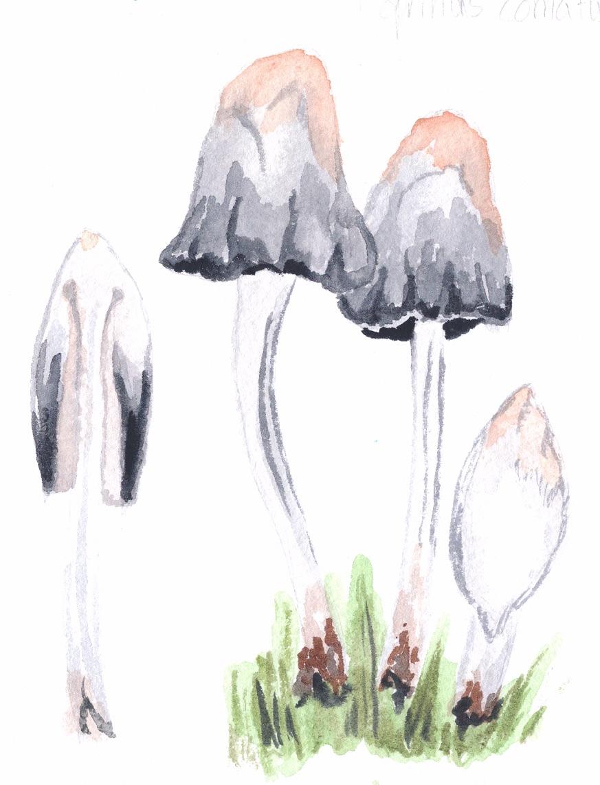 Shaggy Ink Cap mushroom cross stitch kit complete